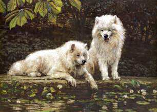 """By A Pond"" Samoyed Fine Art Limited Edition Print by Roger Inman"