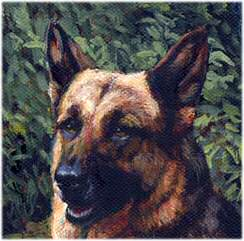 "German Shepherd Closeup from ""The Good Shepherds"" German Shepherd and Border Collie Limited Edition Print by British Artist Roger Inman"